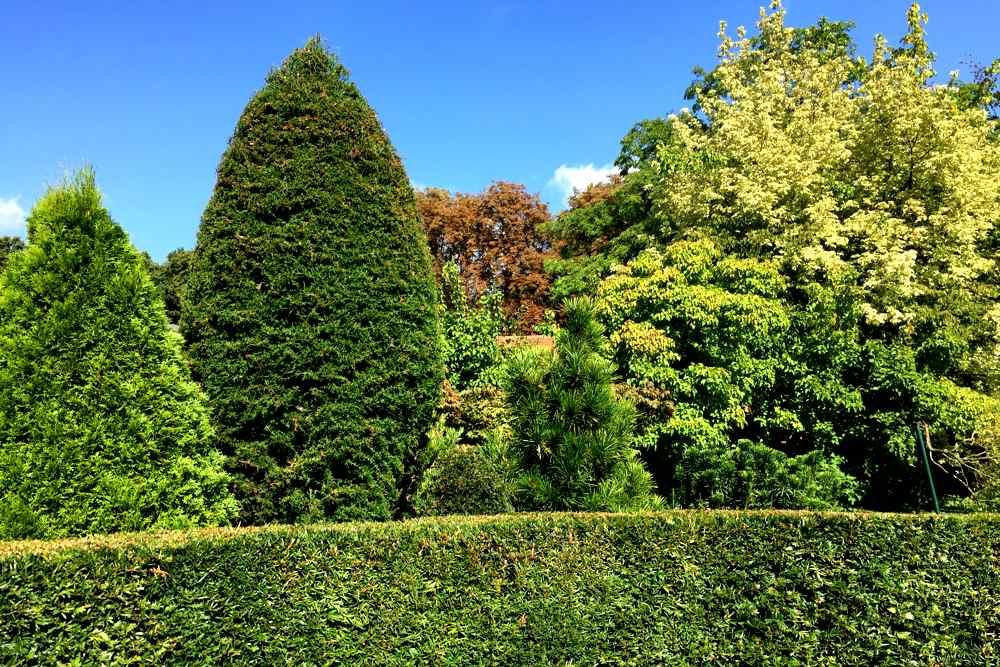 Gartengestaltung mit Immergrünen [Gartentechnik.de Foto]
