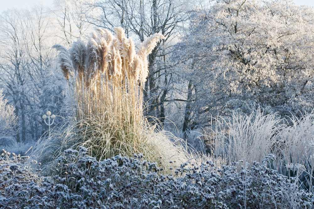 Stauden für den Winter [BdS, GMH, Bach Foto]