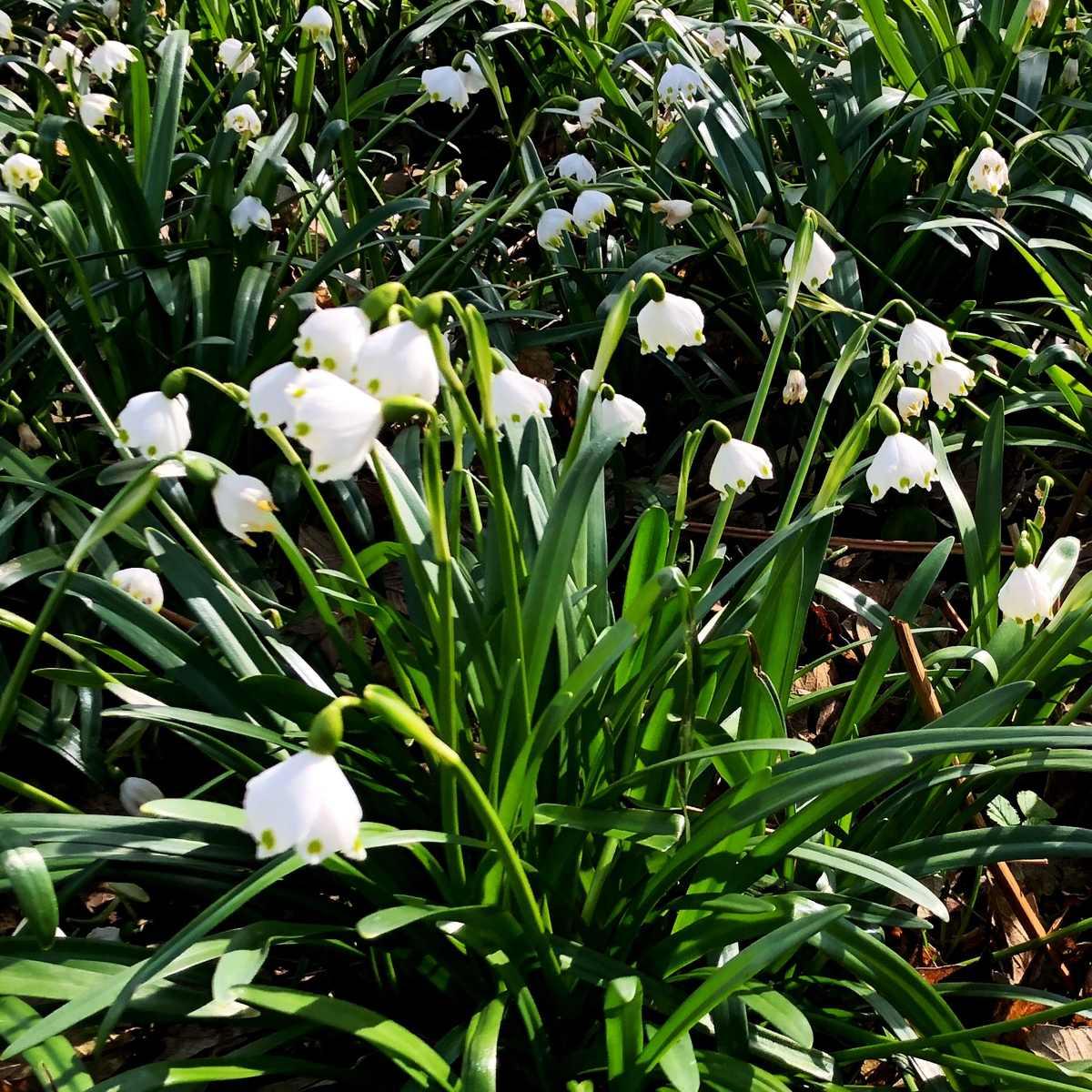 Raus in den Frühling! [GTD Foto]