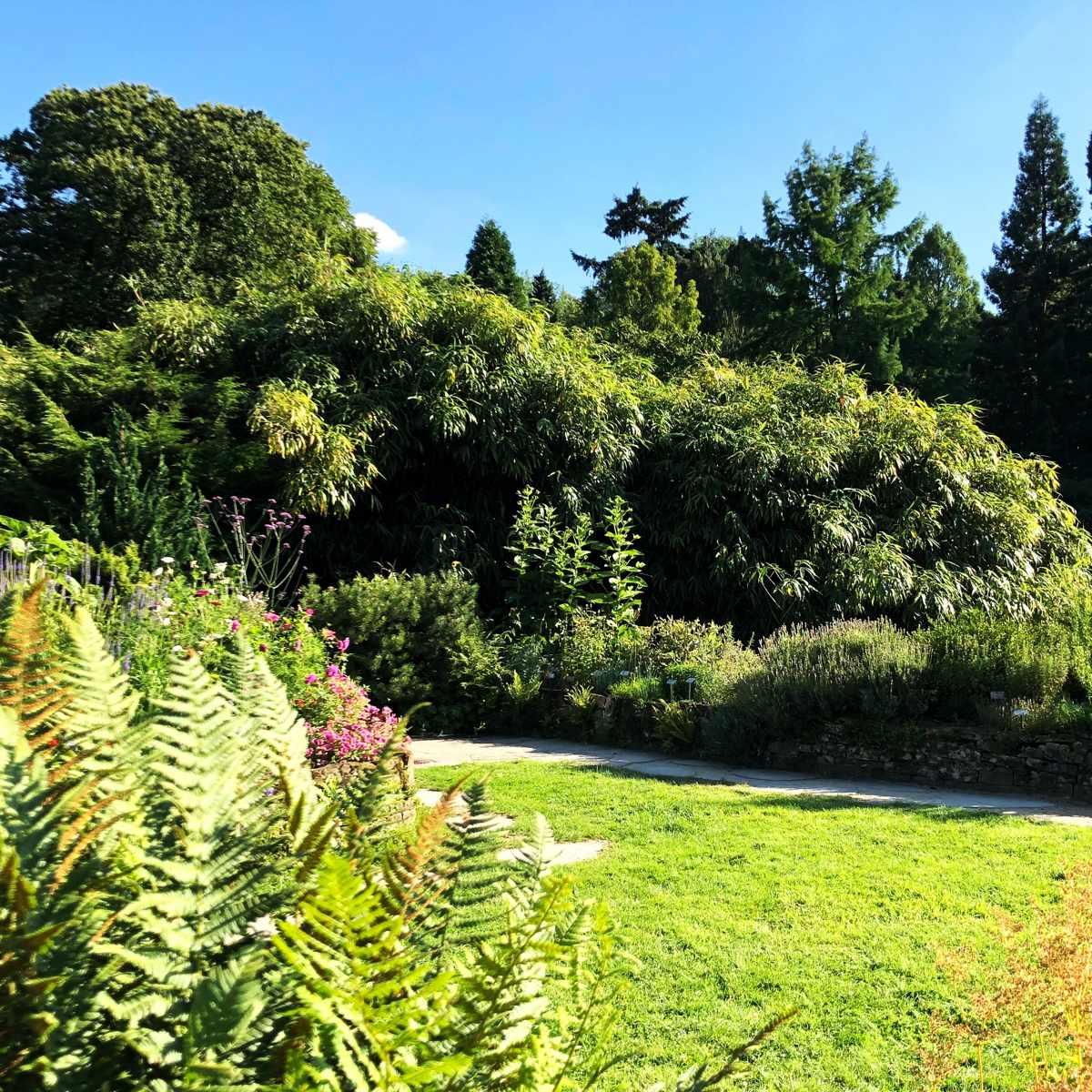 Der naturnahe Garten [GTD Foto]