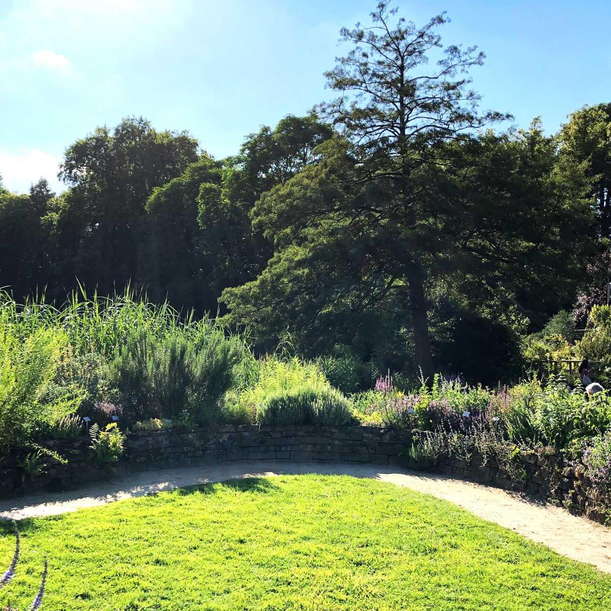 Gärten mit Gehölzen gestalten [GTD Foto]