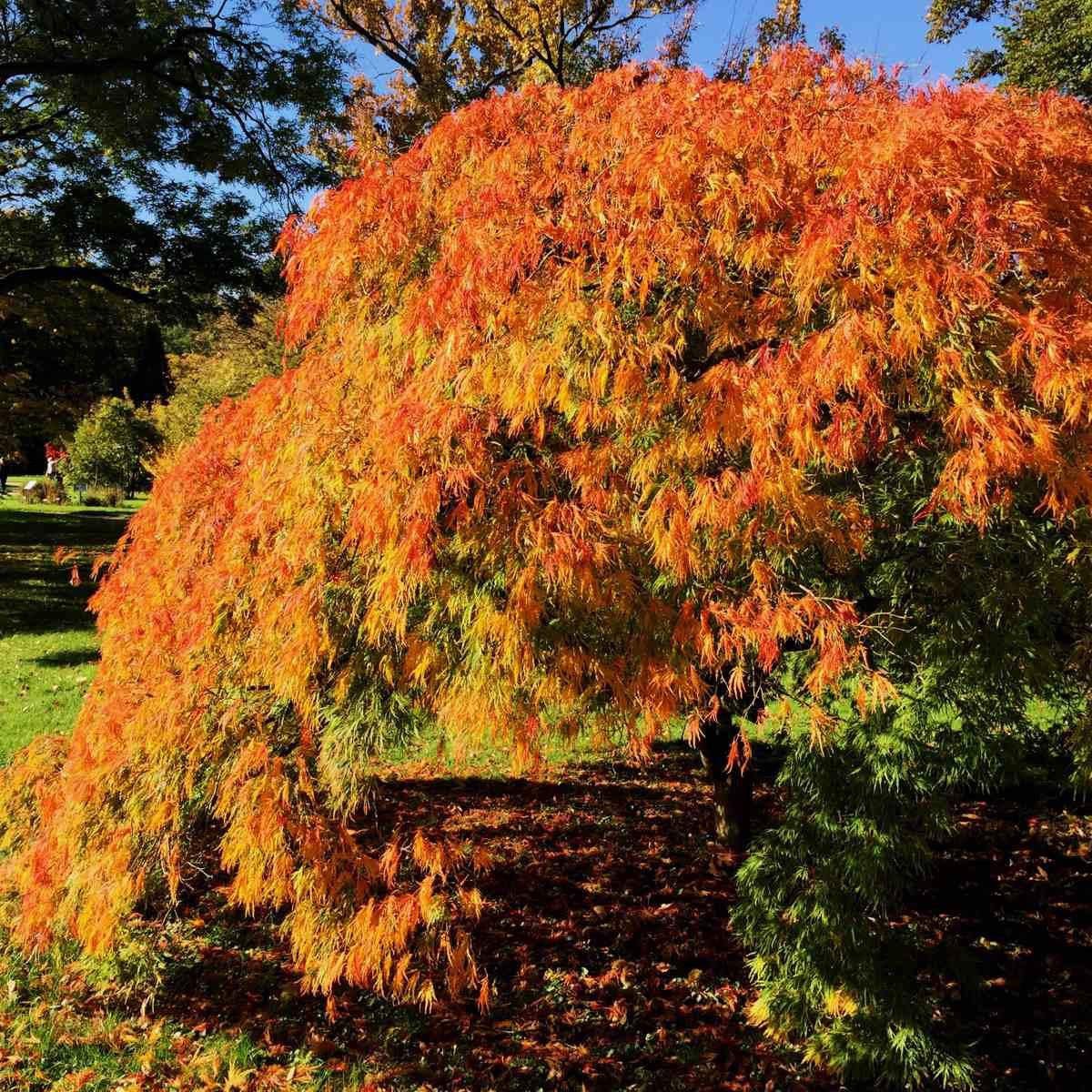 Bunter Herbstgarten [GTD Foto]
