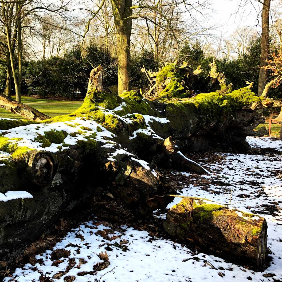 Gärten im Winter [GTD Foto]