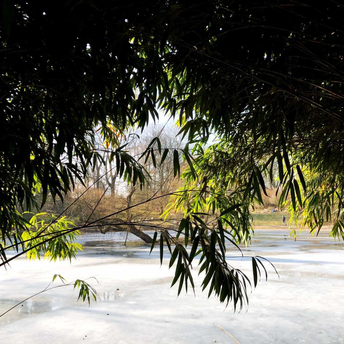 Schöne wintergrüne Stauden [GTD Foto]
