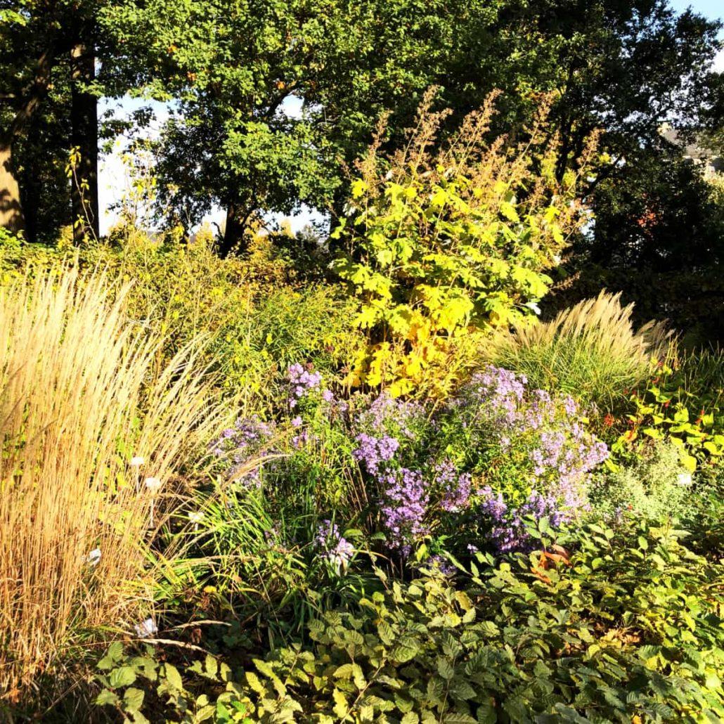 Herbststauden [GTD Foto]